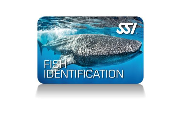 Fish Identification - Identificación de peces Curso SSI en Buceo Getafe